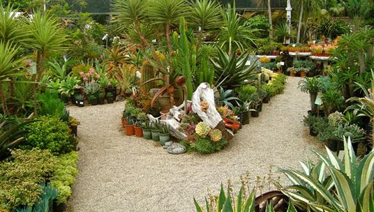 gardens by the sea nursery